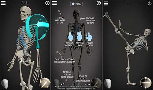 Skelly: Poseable Anatomy Model Apk