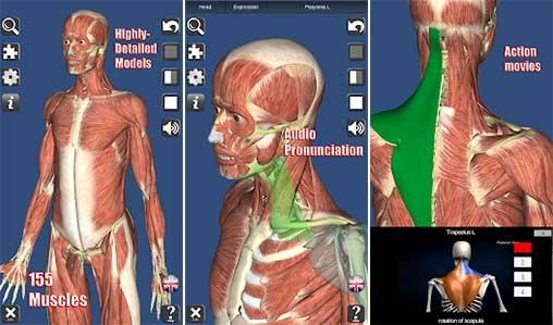 Visual Muscles 3D Apk