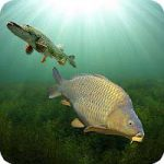 3DCARP Android thumb
